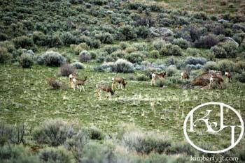 deer2817