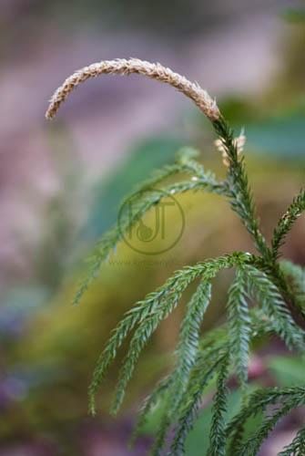 Moss photograph ©2012 Kimberly J Tilley.