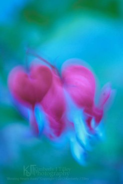 wind blow bleeding heart flowers