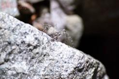 spider, boulder, rocks,