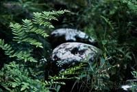 ferns, grass, plants, rocks, summer, green, Kimberly J Tilley