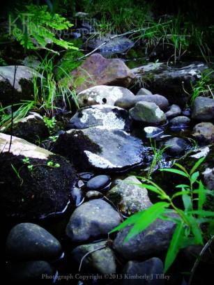 rocks, plants, grass, summer, Kimberly J Tilley