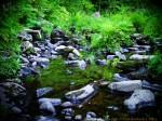Summer, rocks, reflection, water, pool, plants, green, ferns, grass, Kimberly J Tilley, new hampshire