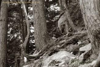 trees, rocks, stones, boulders, landscape, summer, Kimberly J Tilley